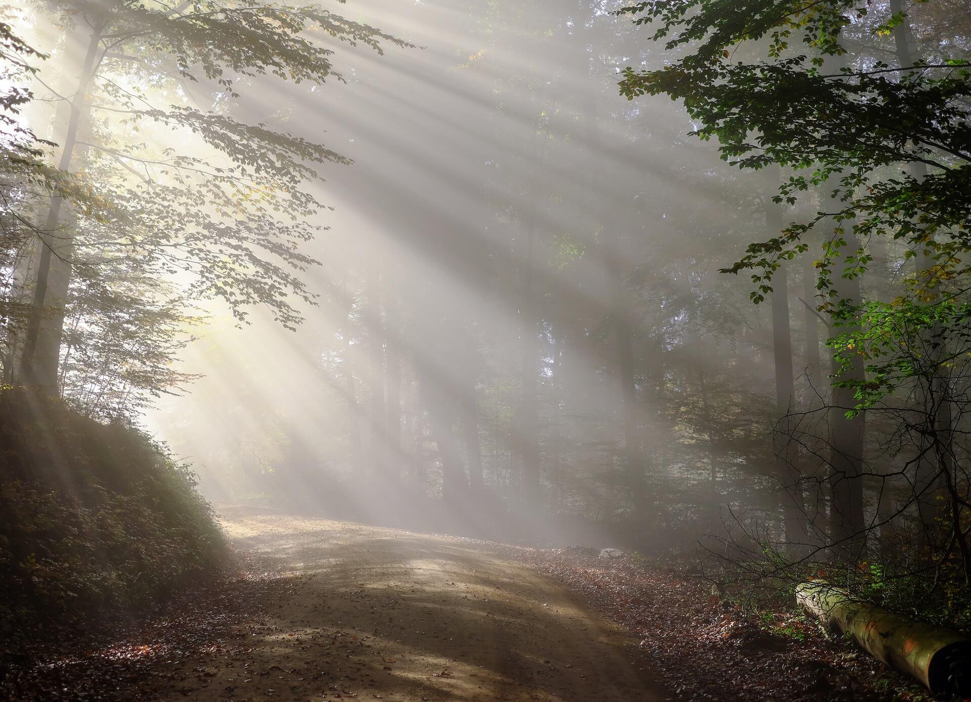 Schwarzwald Morgen Wald mit Weg mit Nebel